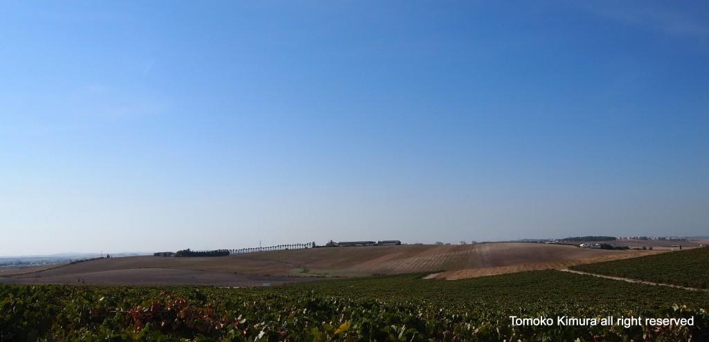 カナリエラの畑からの風景